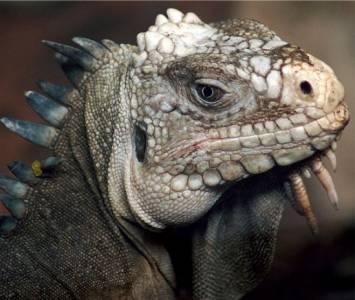 全球最恐怖,最罕見動物。。。包你大開眼界