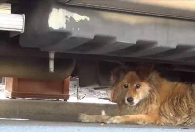 男子谷歌地圖看十年前工作地方,發現狗狗在原地苦等他10年!!