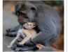 崩潰!!本以為是一個很有愛的故事,沒想到「猴子把貓養大」是為了…