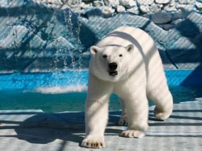 28個有趣真相你未必知道!吃了北極熊的肝臟你會…