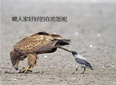 你所不知道的烏鴉!活到現在才知道,其實牠們最愛....
