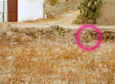 圖中有一隻貓,你找的到嗎? 眼睛要爆了