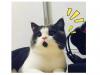 十大紅喵星人,驚訝貓竟然最後一名!!第一名那隻太可愛了!!