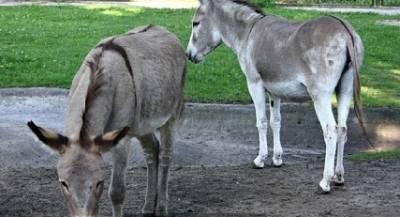 動物園裡一對每天啪啪啪的毛驢 竟引發一場全國性的事件