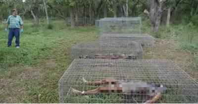 農場裡沒有養任何的動物 而竟然養的是人屍體