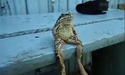 被青蛙跟踪,英國男子憤而報警