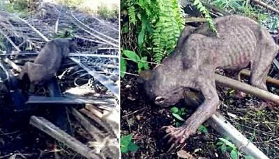 驚悚!!馬來西亞農園驚現「怪獸」?!絕對真實!附影片~