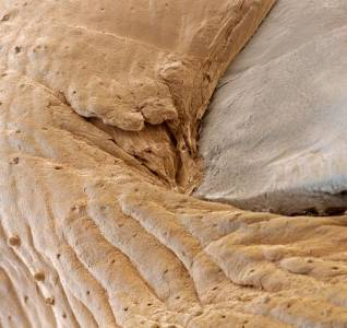 顯微鏡下的人體部位,好嚇人!