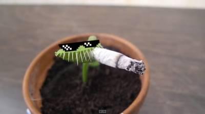 救命啊!我的「捕蠅草」太可怕了!竟然連「那個」都吃下去了!崩潰!
