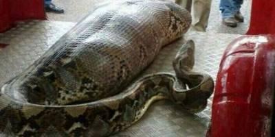 恐怖!老婆被蛇纏住了,老公衝過去救她!竟然拍到這生死離別的一幕!最後...
