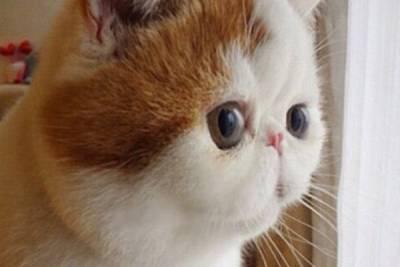 看完這隻肥臉喵星人的內心os 你也會像眾多網友一樣愛上牠!