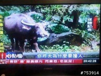 台灣的記者令人憂心