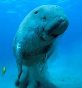 震驚!無法解釋!南極拍到30公尺高巨型人類!!