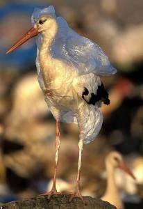動物悲泣!人類濫丟垃圾讓他們變成這個德性,你還不停手嗎?