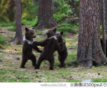 =熊=熊=熊= 圈