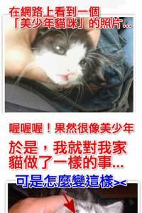網路看到「美少年貓」馬上讓寶貝模仿一下…怎麼變這樣>