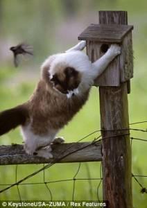貓咪伏擊小鳥計謀落空陷入失落