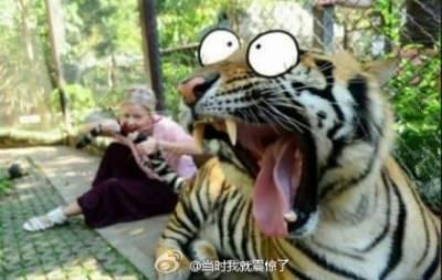 這小女孩太有膽!竟然咬老虎尾巴!!咬了老虎尾巴以後會…?