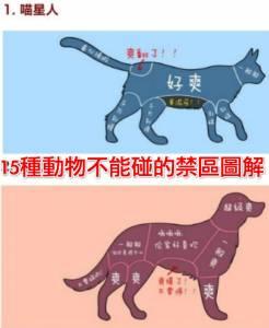 15種動物不能碰的禁區爆笑圖解