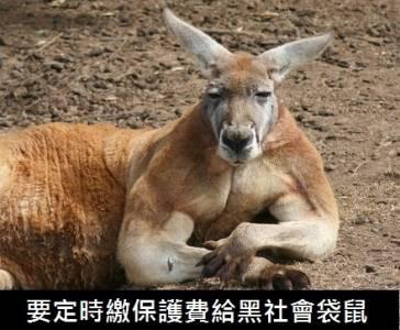 搞笑民族-澳洲人的日常,戰鬥民族算什麼!?