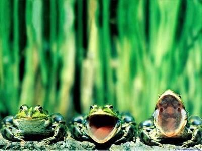 青蛙說了: 我不要