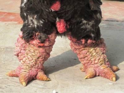 太可怕了,這對看似「恐龍」的雙腳竟然是這種生物!更誇張的是,某個國家的人更還把它當作美食....