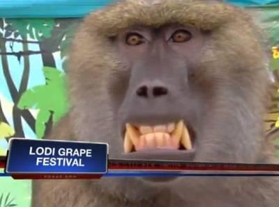 狒狒也太大膽 襲胸一位美女