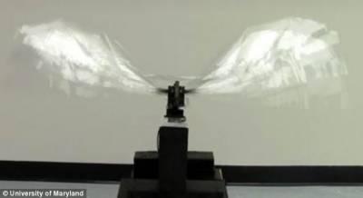 美軍研製輕型高仿真機器烏鴉:僅重9.7克