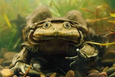 世界最醜陋動物大比拼