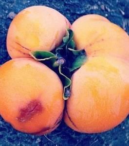 韓國網站登出變異蔬菜照:或為福島輻射塵所致