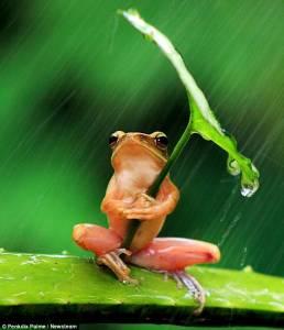 樹蛙撐葉子傘遮風擋雨精彩瞬間