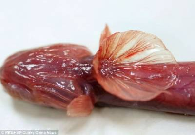 太湖發現罕見紫鰻蝦虎魚:形似科幻異形生物