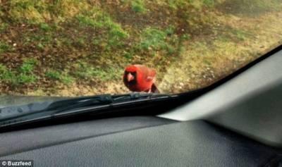 真實版憤怒的小鳥