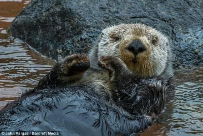 水獺情侶執手水中打盹溫馨瞬間