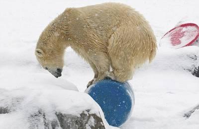 美可愛北極熊踩水桶秀平衡力
