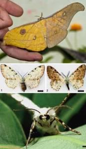 盤點神奇雌雄嵌合體動物:稀有龍蝦顏色分明