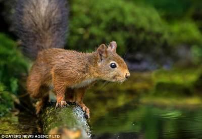 荷蘭小松鼠竭盡全力打撈落水堅果