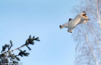 勇敢松鼠為尋找松果騰空飛躍