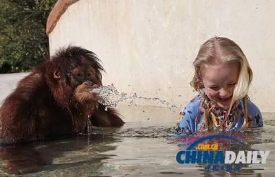 英國小蘿莉與密友猩猩嬉水玩耍和諧融洽
