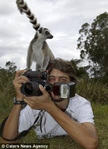 頑皮狐猴愛拍照:搶奪攝影師相機