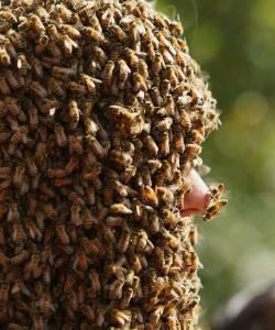"""加拿大舉辦""""蜜 蜂鬍子""""大賽:萬隻蜜蜂爬滿臉"""