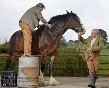 英國馬匹高3米有望成世界最高馬