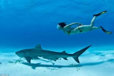 這些驚人照片展示了這位南非自由潛水者和虎鯊同游的精彩瞬間。