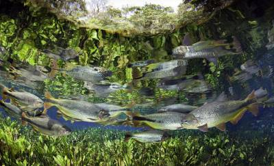 攝影師模擬魚視角水下拍夢幻世界