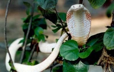 十種神奇白化動物