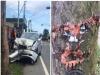 原本單純的車禍現場照片,但當大家看到那棵樹的傷勢部位,全都笑噴了!