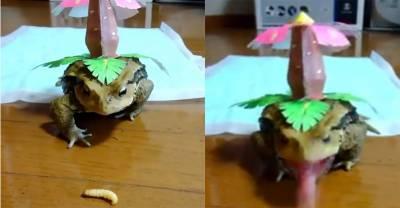 太血腥了!「妙蛙種子」屠殺綠毛蟲的噁心畫面曝光,綠毛蟲最後竟然...太變態了!