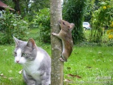 真實版的Tom and Jerry(貓和老鼠)