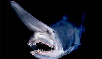 11種超可怕的深海生物,被咬到後即致命,但我好想親眼看看喔~~